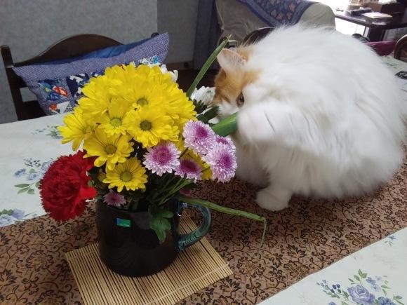 庭先も春の饗宴_d0116059_10013283.jpg