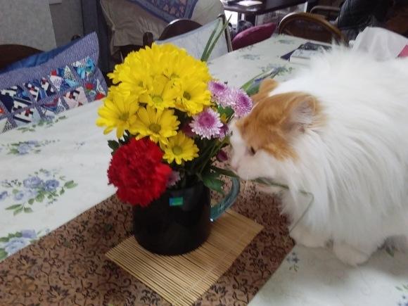 庭先も春の饗宴_d0116059_10032237.jpg