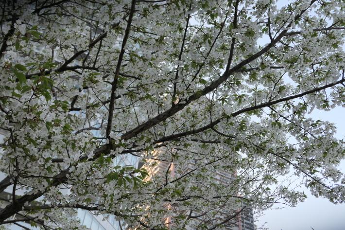 花、花、花_d0193569_07414150.jpg