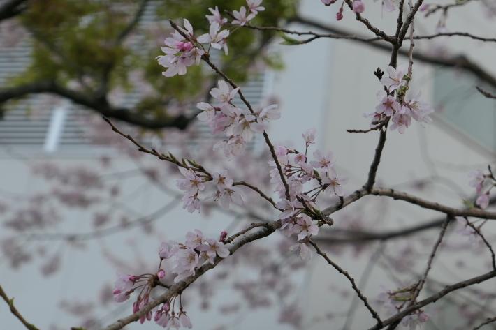 花、花、花_d0193569_07414622.jpg