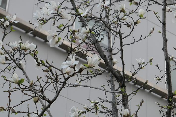 花、花、花_d0193569_07420928.jpg