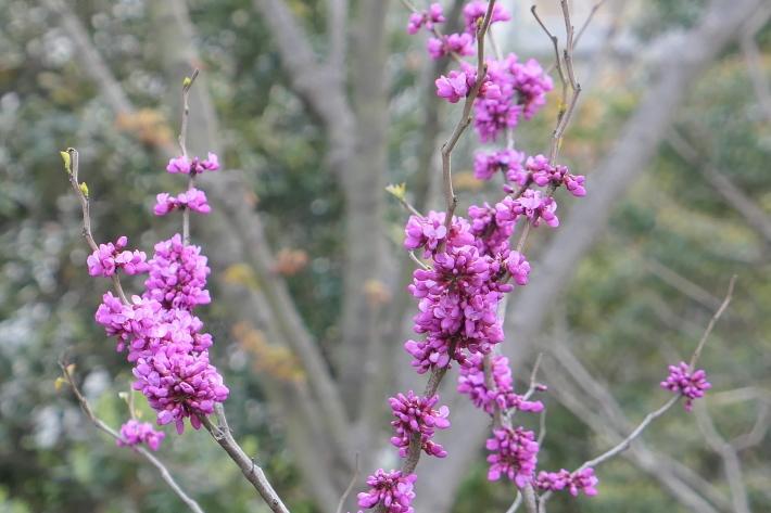 花、花、花_d0193569_07421473.jpg