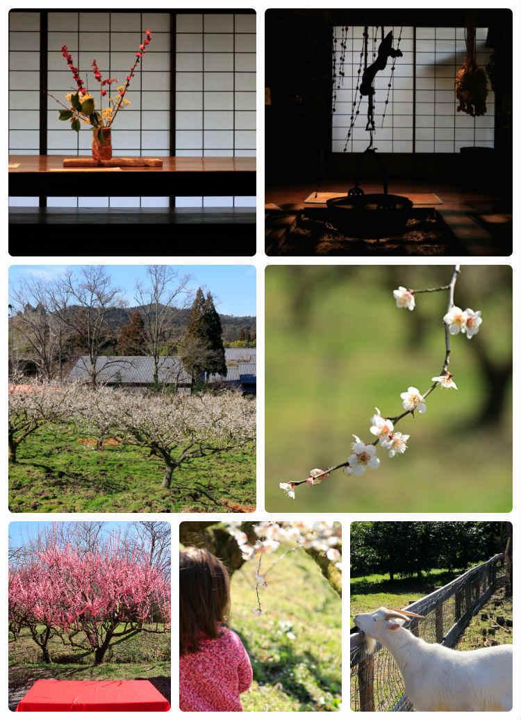 弥生の春~寿長生の郷へ_b0055171_15120096.jpg