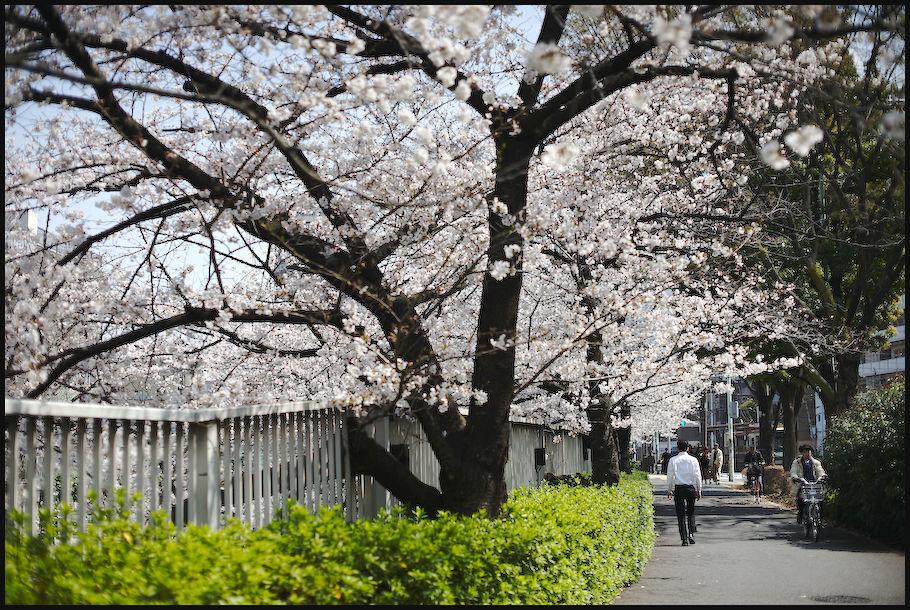 神田川 -1_b0340572_21453362.jpg