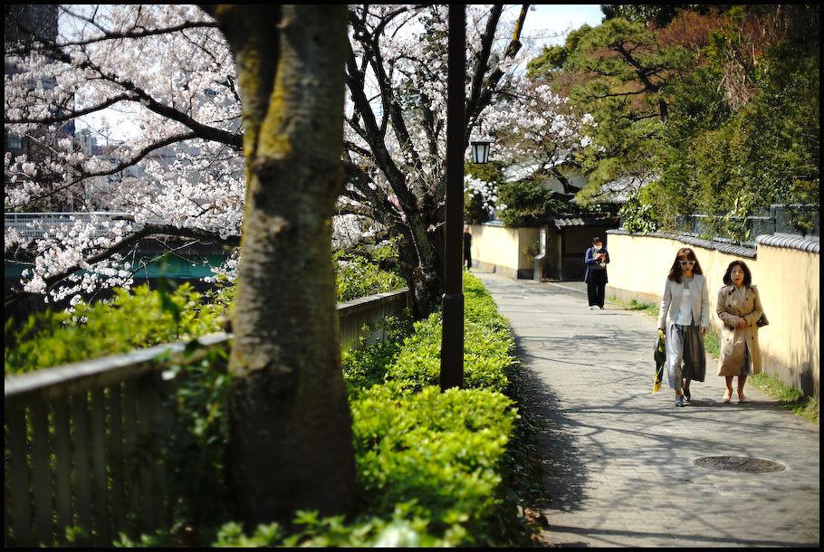 神田川 -1_b0340572_21454952.jpg