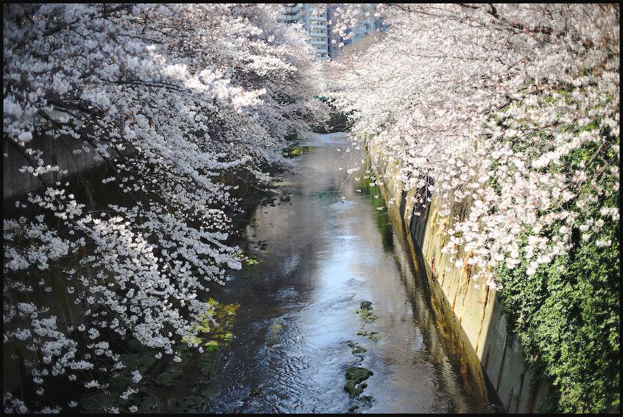 神田川 -1_b0340572_21455541.jpg
