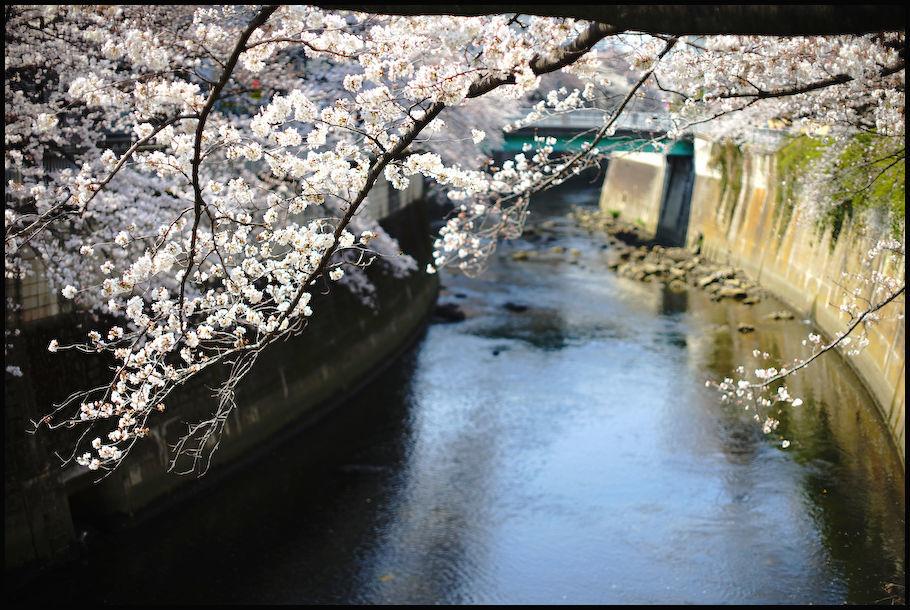 神田川 -1_b0340572_21461030.jpg