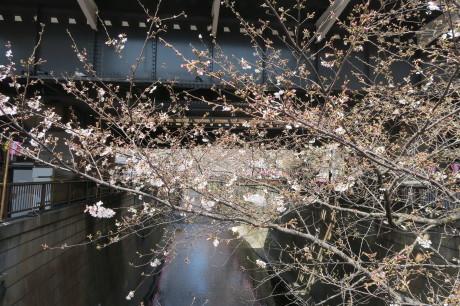 今度は夜桜もですね、、、_e0292172_17311552.jpg