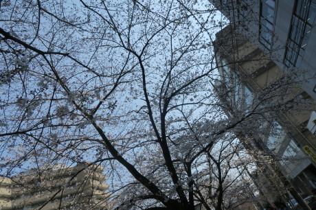 今度は夜桜もですね、、、_e0292172_17342168.jpg