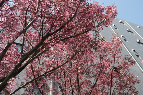 今度は夜桜もですね、、、_e0292172_17353767.jpg
