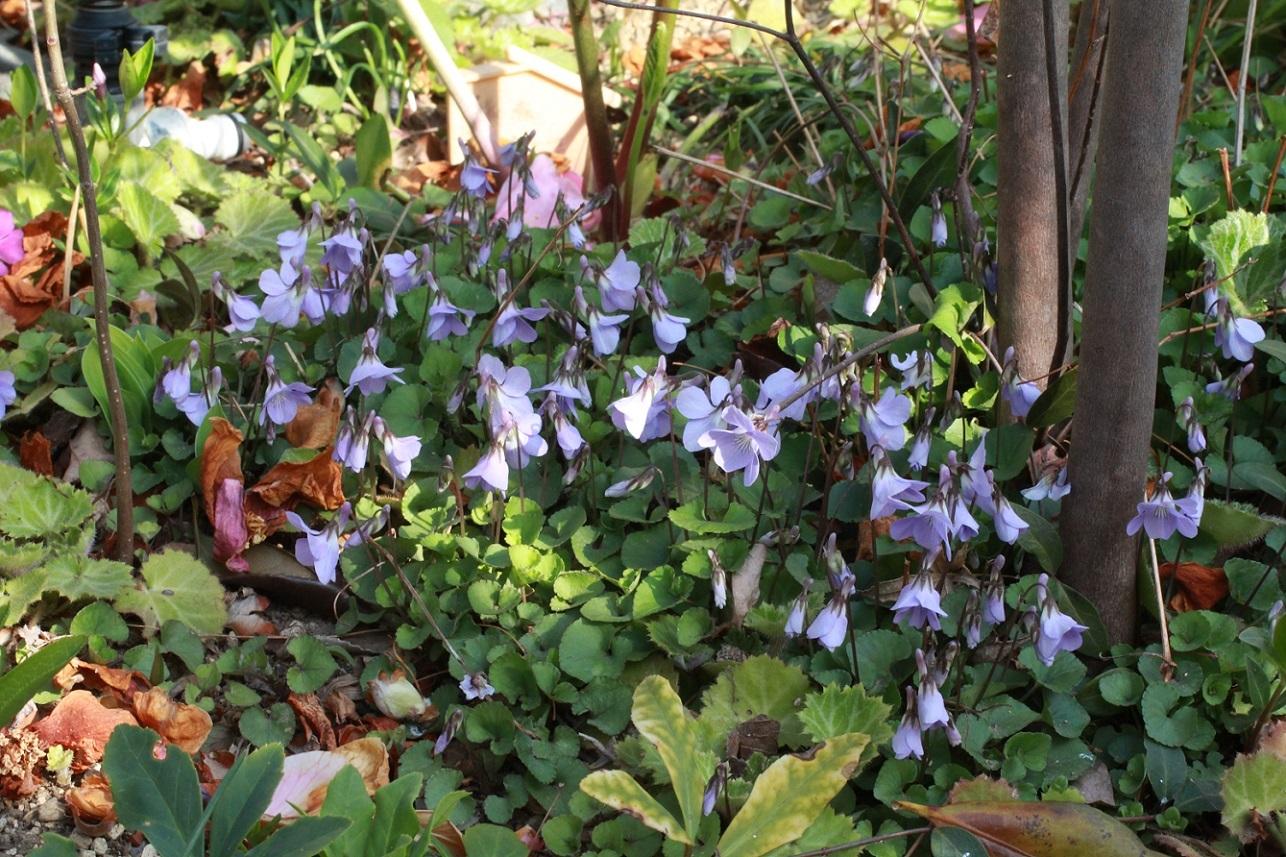 一人一人の小さな花を集めて_a0107574_06543440.jpg