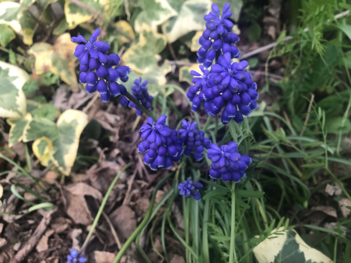 春の庭(ガーデニング)_e0233674_10261955.jpg