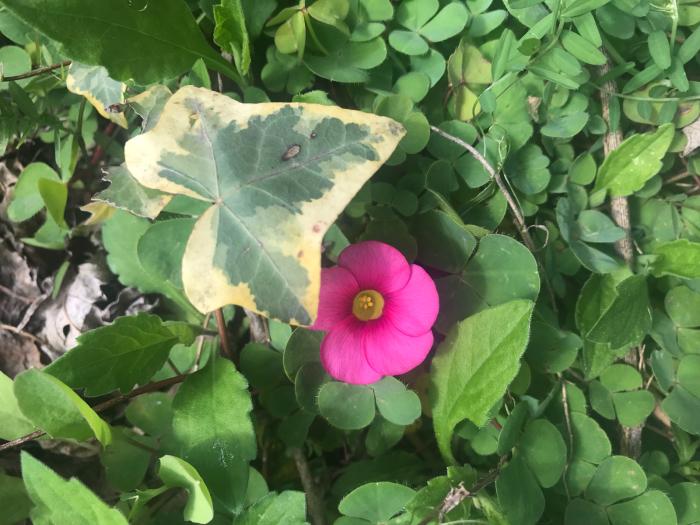 春の庭(ガーデニング)_e0233674_10262705.jpg