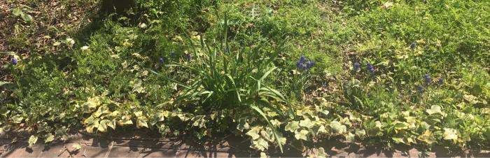 春の庭(ガーデニング)_e0233674_10301544.jpg