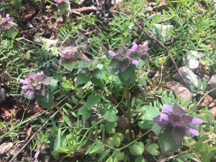 春の庭(ガーデニング)_e0233674_10302323.jpg
