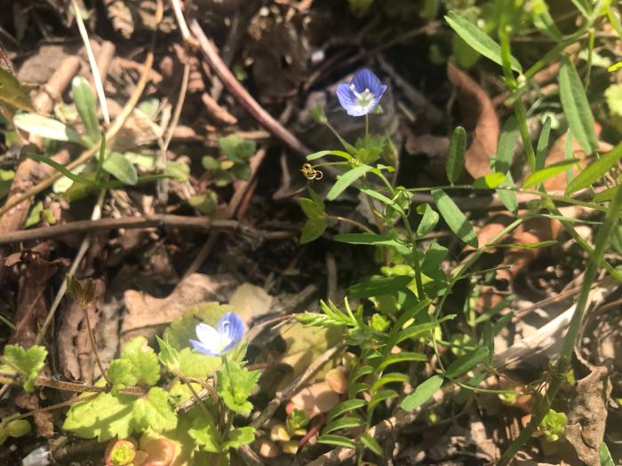 春の庭(ガーデニング)_e0233674_10303115.jpg