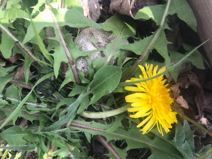 春の庭(ガーデニング)_e0233674_10305893.jpg