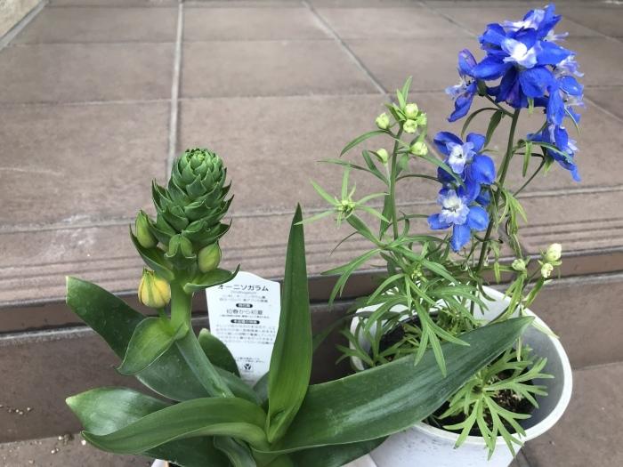 春の庭(ガーデニング)_e0233674_10530513.jpeg