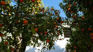 スペインのイスラム建築2ー形式の中の豊かな庭園_a0166284_17561473.jpg