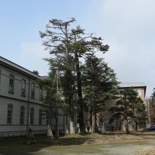 第一回卒業生記念樹&開校拾周年記念植樹_c0075701_10241142.jpg