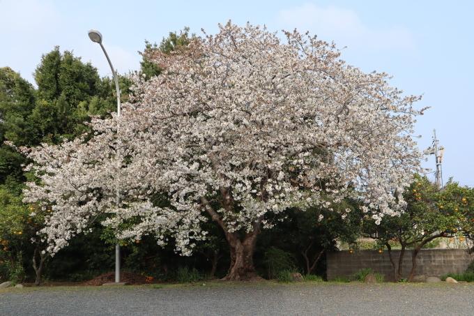 春だよ!   369_b0239402_09132261.jpg