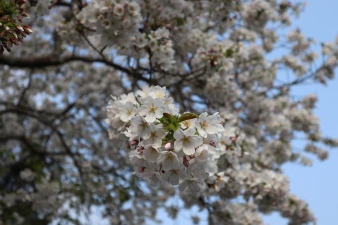 春だよ!   369_b0239402_09133071.jpg