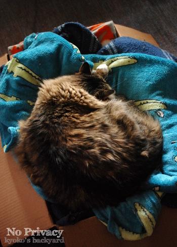 飼い猫のプライバシー_b0253205_06022429.jpg