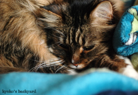 飼い猫のプライバシー_b0253205_06033514.jpg