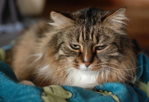 飼い猫のプライバシー_b0253205_06034776.jpg