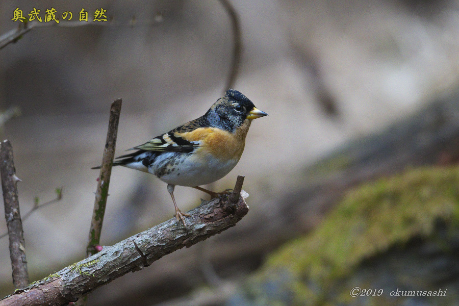 お山の冬鳥たち②_e0268015_21440820.jpg