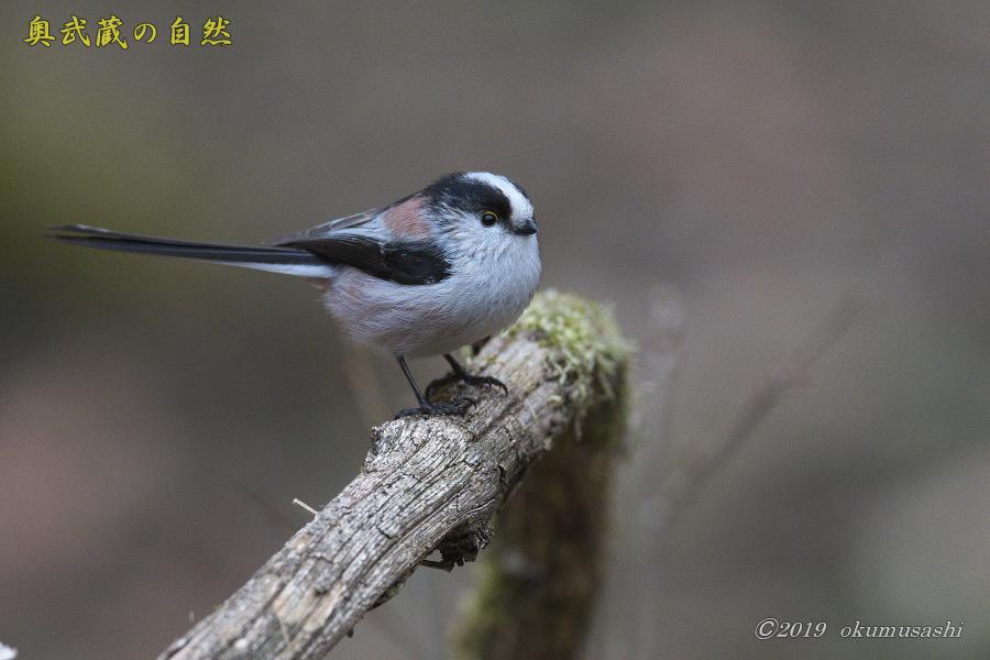 お山に戻ってきた鳥たち(Ⅰ)_e0268015_21494817.jpg