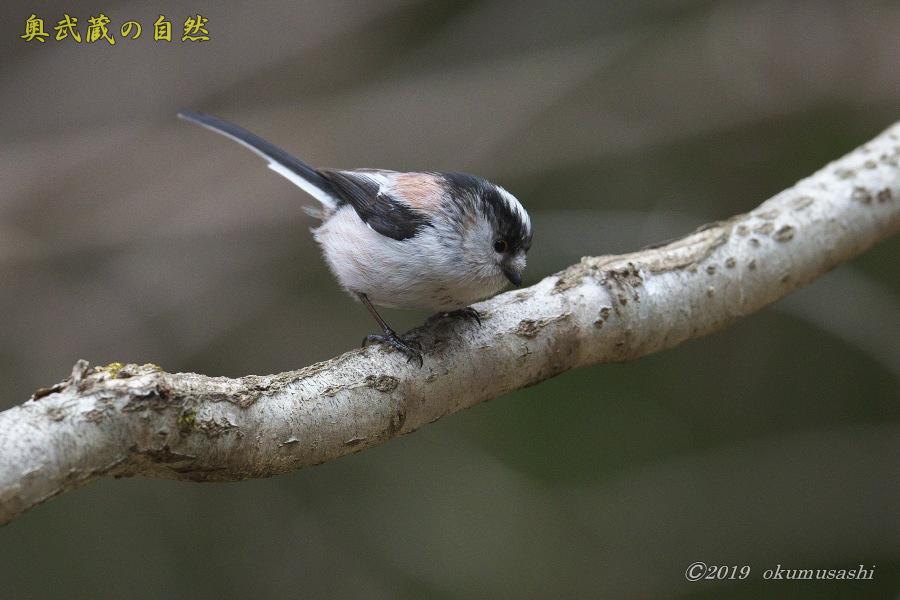 お山に戻ってきた鳥たち(Ⅰ)_e0268015_21500548.jpg