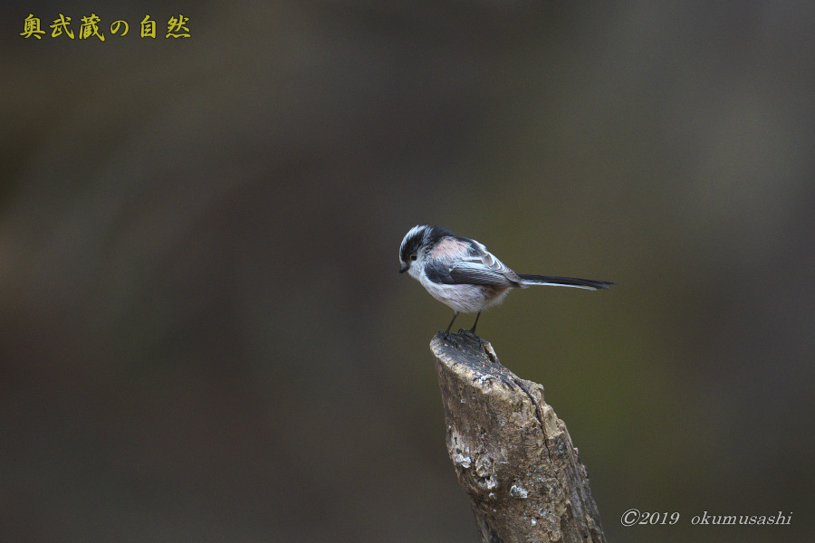 お山に戻ってきた鳥たち(Ⅰ)_e0268015_21503272.jpg
