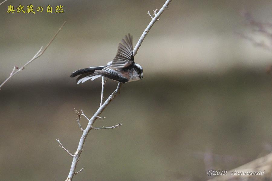 お山に戻ってきた鳥たち(Ⅰ)_e0268015_21505089.jpg