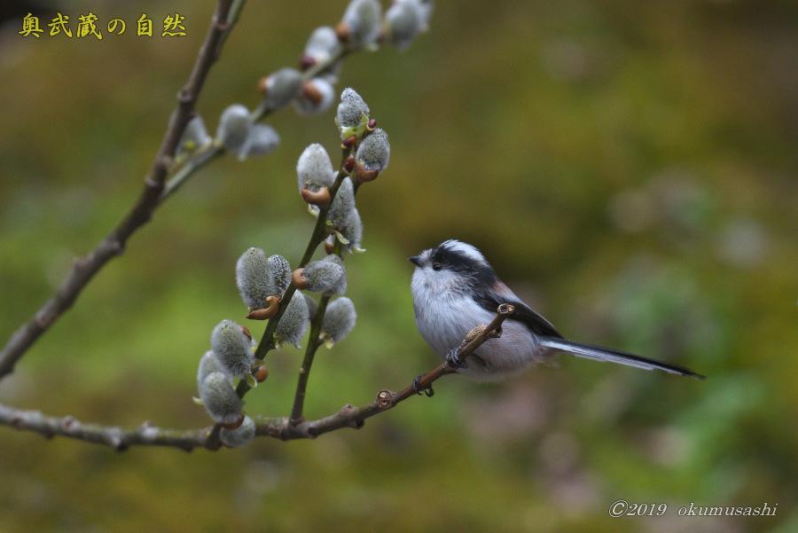お山に戻ってきた鳥たち(Ⅰ)_e0268015_21511080.jpg