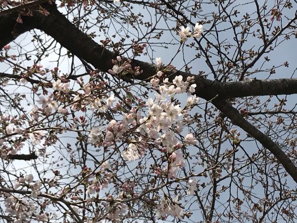 春の訪れ。_b0157216_23465363.jpg