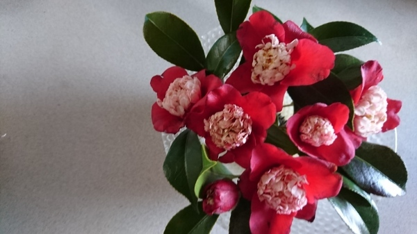 春フェルト_c0290116_20394849.jpg