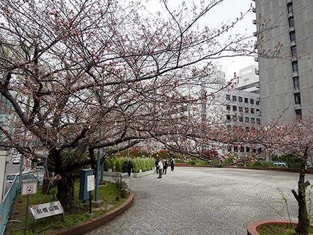無念のお花見弁当_f0097523_16525859.jpg