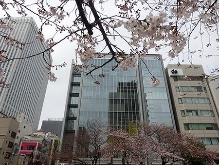 無念のお花見弁当_f0097523_16531034.jpg