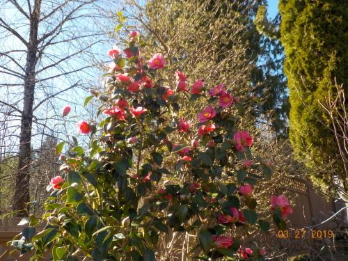 春ですね。_a0173527_23461939.jpg