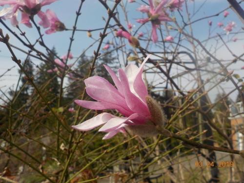 春ですね。_a0173527_23484698.jpg