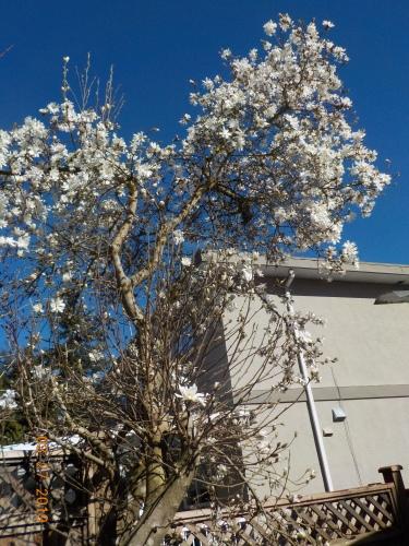 春ですね。_a0173527_23552640.jpg