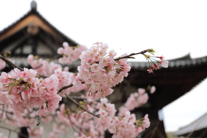 【唐招提寺】奈良旅行 - 2 -_f0348831_20045387.jpg
