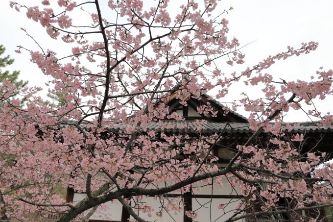 【唐招提寺】奈良旅行 - 2 -_f0348831_20045398.jpg