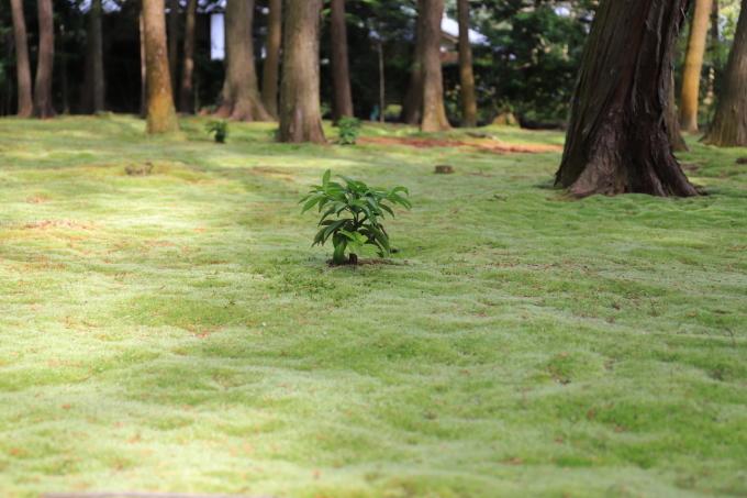 【唐招提寺】奈良旅行 - 2 -_f0348831_20045855.jpg