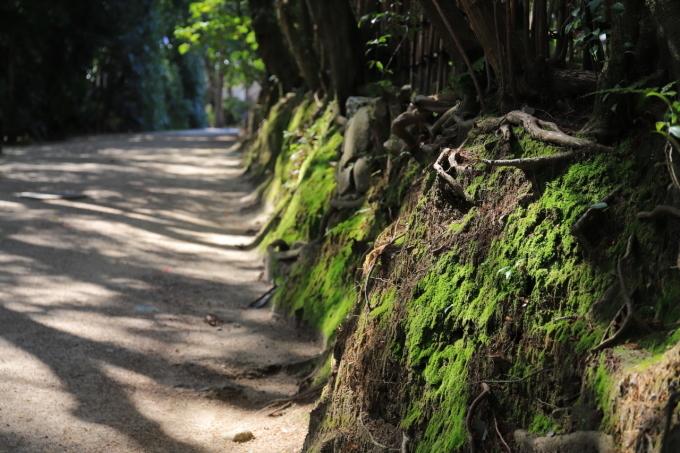 【唐招提寺】奈良旅行 - 2 -_f0348831_20051484.jpg