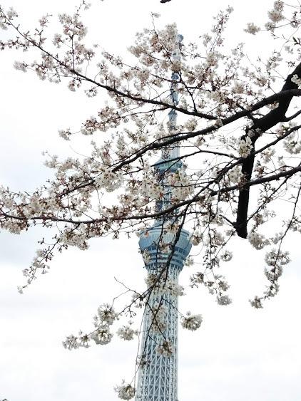 桜の季節の展示会巡り♡_f0340942_22552292.jpg