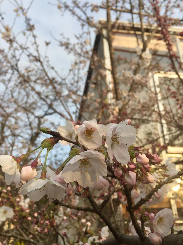 20190328 春のごはんをたべたくなるうつわ_d0145345_19110788.jpg