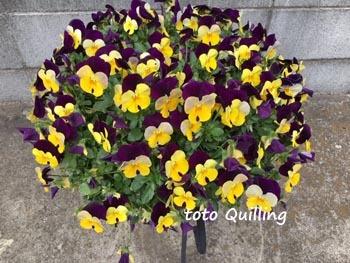 花盛り_a0335352_07583923.jpg