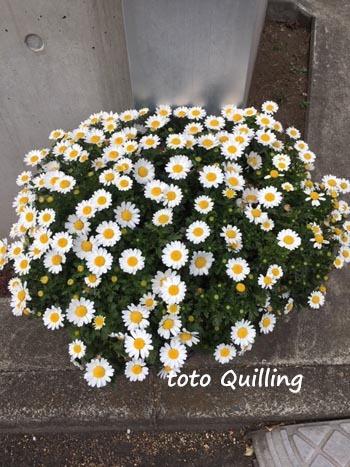 花盛り_a0335352_08004655.jpg